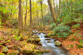 Creek roaring fork cascades through a lush forest and mossy boulders great smoky mountains national park tennessee Stock Photo