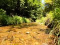 Creek in wild nature Royalty Free Stock Photo