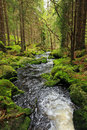 Creek in the wilderness from the mountains sumava in southern czech beautiful Royalty Free Stock Images
