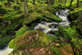 Creek in the wilderness from the mountains sumava in southern czech beautiful Stock Images