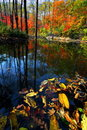 Creek in the wood during autumn Royalty Free Stock Photo