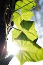 Creeper plant on a tree Stock Photos