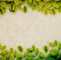 Creepers on paper background mulberry with environment concept Royalty Free Stock Photography