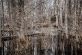 Creepy Barren Swamp Forest Royalty Free Stock Photo