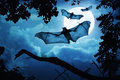Creepy bats fly in for halloween night by a full moon these on with behind them Royalty Free Stock Images