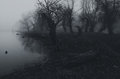 Creepy dark forest beside river shore on misty autumn day Royalty Free Stock Photo