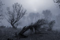 Creepy landscape painting showing dark forest on misty day Royalty Free Stock Photo