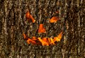 Creepy smile wooden background, fire mask on the bark holiday halloween background Royalty Free Stock Photo