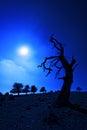 Creepy tree at night with moonlight Royalty Free Stock Photo