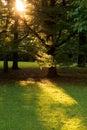 Crepúsculo no parque Imagens de Stock