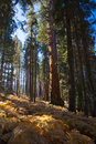 Crescent Meadow Picnic Area Royalty Free Stock Photo