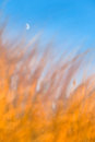 Crescent Moon Above Burning Grass Royalty Free Stock Photo