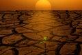 image photo : Sunrise dry ground new growth