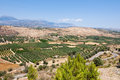 Cretan landscape with olive trees.Crete. Royalty Free Stock Photo