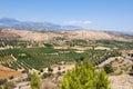 Cretan landscape with olive trees.Crete. Royalty Free Stock Photo