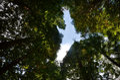 image photo : Nature creation