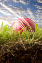 Cricket ball on grass Royalty Free Stock Image