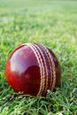 Cricket ball on green grass. Stock Photography