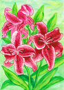 Crimson lilies hand painted picture watercolours Royalty Free Stock Image