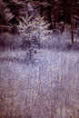 Crippled trees in swamp a which is overgrown with grass photo taken infrared light but not monochrome Royalty Free Stock Images