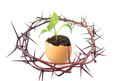 Crisis difficulties hope young green plant grow in eggshell with crown of thorns isolated on white background development way out Stock Photo