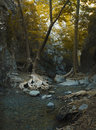 Cristal water clear river between rocks and roots of trees in troodos mountains in cyprus Royalty Free Stock Photography