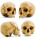 Cráneo humano Imágenes de archivo libres de regalías