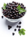 Crockery with black currant. Royalty Free Stock Photos