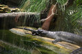 Crocodile de gharial se dorant dans le zoo de la floride Photo stock