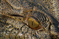 Crocodile eye closeup Royalty Free Stock Photo