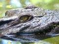 Crocodile Eyes Detail Royalty Free Stock Photo