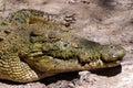 Crocodile Farm Stock Photography