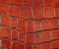 Crocodile leather Royalty Free Stock Image