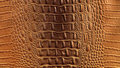 Crocodile leather Stock Photos