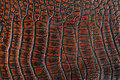 Crocodile leather Stock Photography