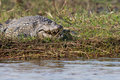Crocodile relaxing with his mouth open