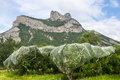 Crocodile shaped rock in france and apple trees hautes alpes provence alpes cote d azur Royalty Free Stock Image