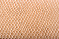 Crocodile skin texture Royalty Free Stock Image