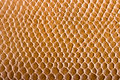 Crocodile skin texture Stock Images