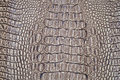 Crocodile skin texture are background Royalty Free Stock Photography