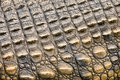 Crocodile skin texture shot in south africa Stock Photo