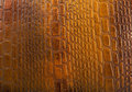 Crocodile skin texture tint brown as a wallpaper Royalty Free Stock Photo