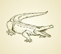 Crocodile. Vector drawing Royalty Free Stock Photo