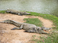 Crocodiles lie down on ground Stock Photo