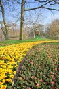 Crocus field the image of at groningen city on the north of netherlands Stock Photography