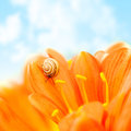 Crocus flower with snail Royalty Free Stock Photography