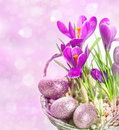 Crocus flowers over blurred background beautifil spring in basket with easter eggs decoration Royalty Free Stock Photos