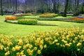 Crocus, Tulips Garden Royalty Free Stock Photo