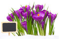 Crocuses with slate board for text Stock Image