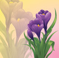 Crocuses spring crocus flowers on a pastel background Royalty Free Stock Images